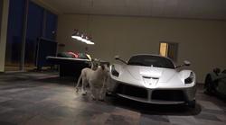 Povabljeni v še eno luksuzno garažo, kjer se med super avtomobili sprehajata kar dva redka bela leva