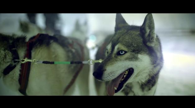 Kdo je hitrejši - Land Rover Discovery Sport ali pasja vprega šestih psov? (foto: Land Rover)