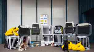 Test boksov za prevoz psov: še zdaleč niso vsi dovolj dobri!