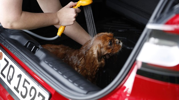 Ford Puma kot kot mobilnia kopalnica za pse (video) (foto: Ford)