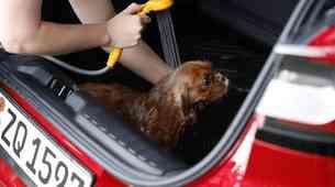 Ford Puma kot kot mobilnia kopalnica za pse (video)