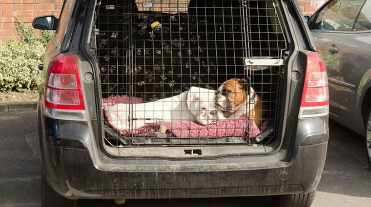 Dokazano: vozniki psov so bolj varni (foto: Profimedia)