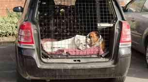 Dokazano: vozniki psov so bolj varni