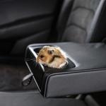 Prevoz domačih živali v avtomobilu: Kaj pravijo pravila in kaj svetujejo strokovnjaki? (foto: Škoda)