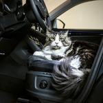 V dobi avtonomnih vozil živali morda ne bodo več samo potniki. (foto: Škoda)