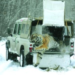 Ko je v avtomobilu tudi žival, se je treba vzdržati hitrih pospeškov. (foto: Land Rover)