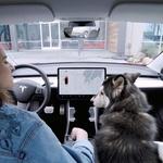 Prevoz domačih živali v avtomobilu: Kaj pravijo pravila in kaj svetujejo strokovnjaki? (foto: Profimedia)