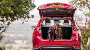 Prevoz domačih živali v avtomobilu: Kaj pravijo pravila in kaj svetujejo strokovnjaki?